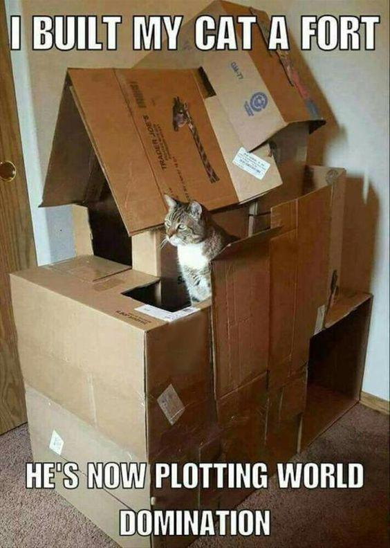 I BUILT MY CAT A FORT