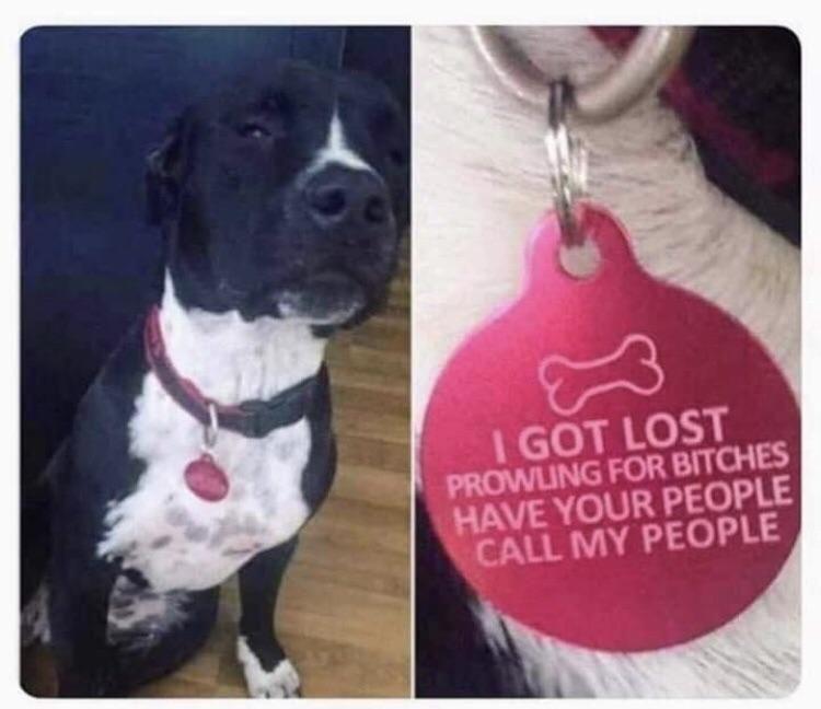 Doggie Pimp