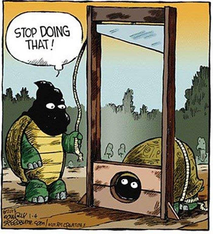 Turtles being turtles