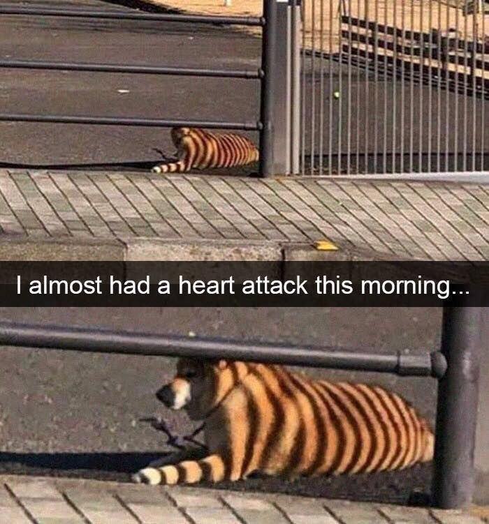 Tiger or Dog