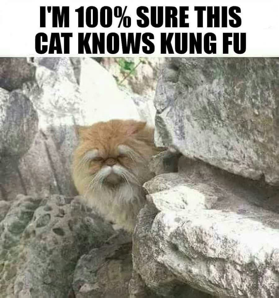 This cat knows...