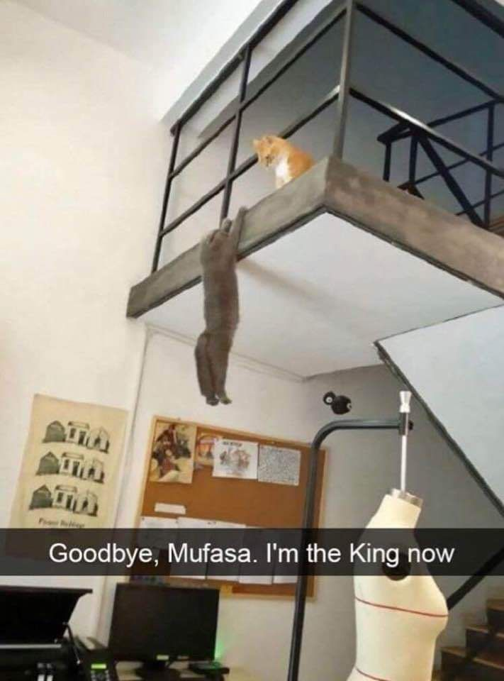The new lion king live action looks unreal.