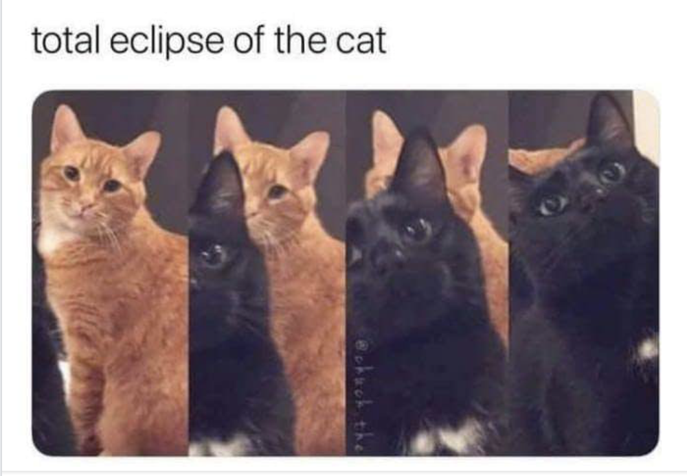 Eclipce of the cat