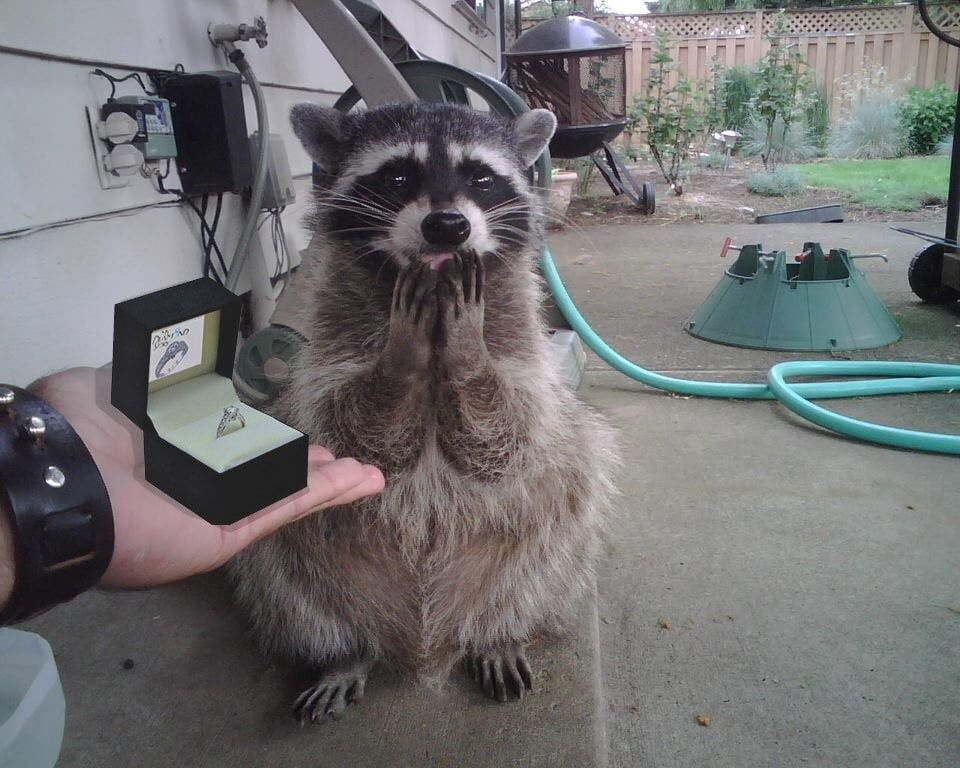 Will you marry me..?