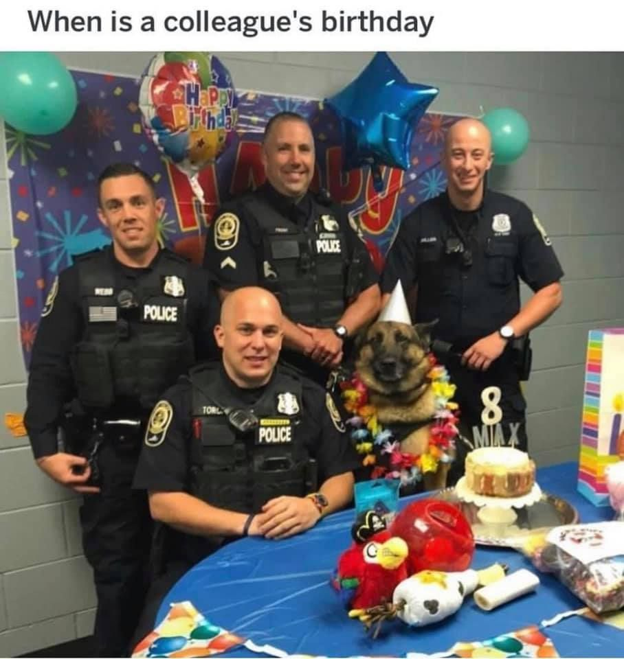 Extra cake for biting a black lab on duty