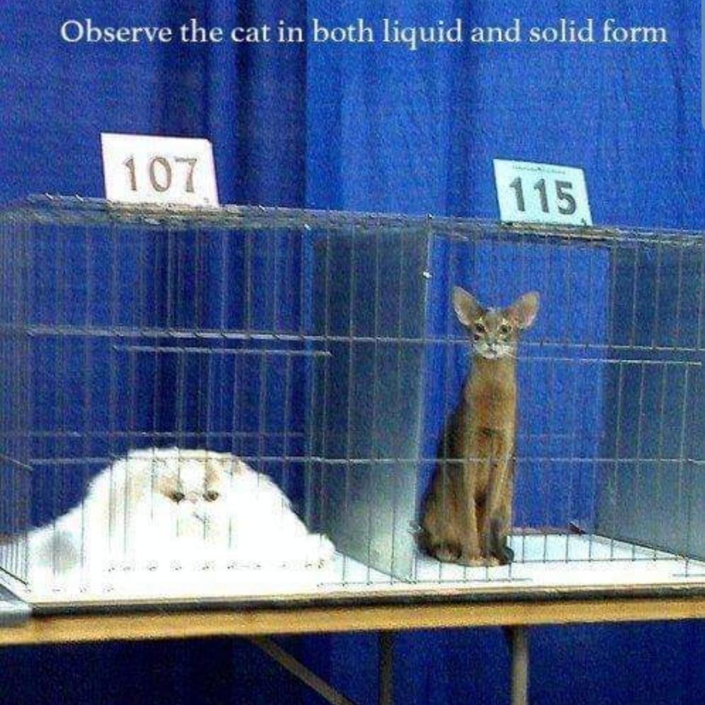 I've always wanted a liquid cat personally.