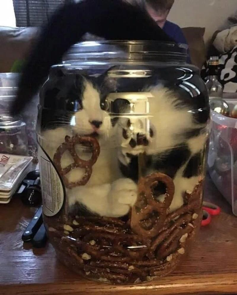 Kitty just wanted a pretzel - Shoulda asked for some help in the first place