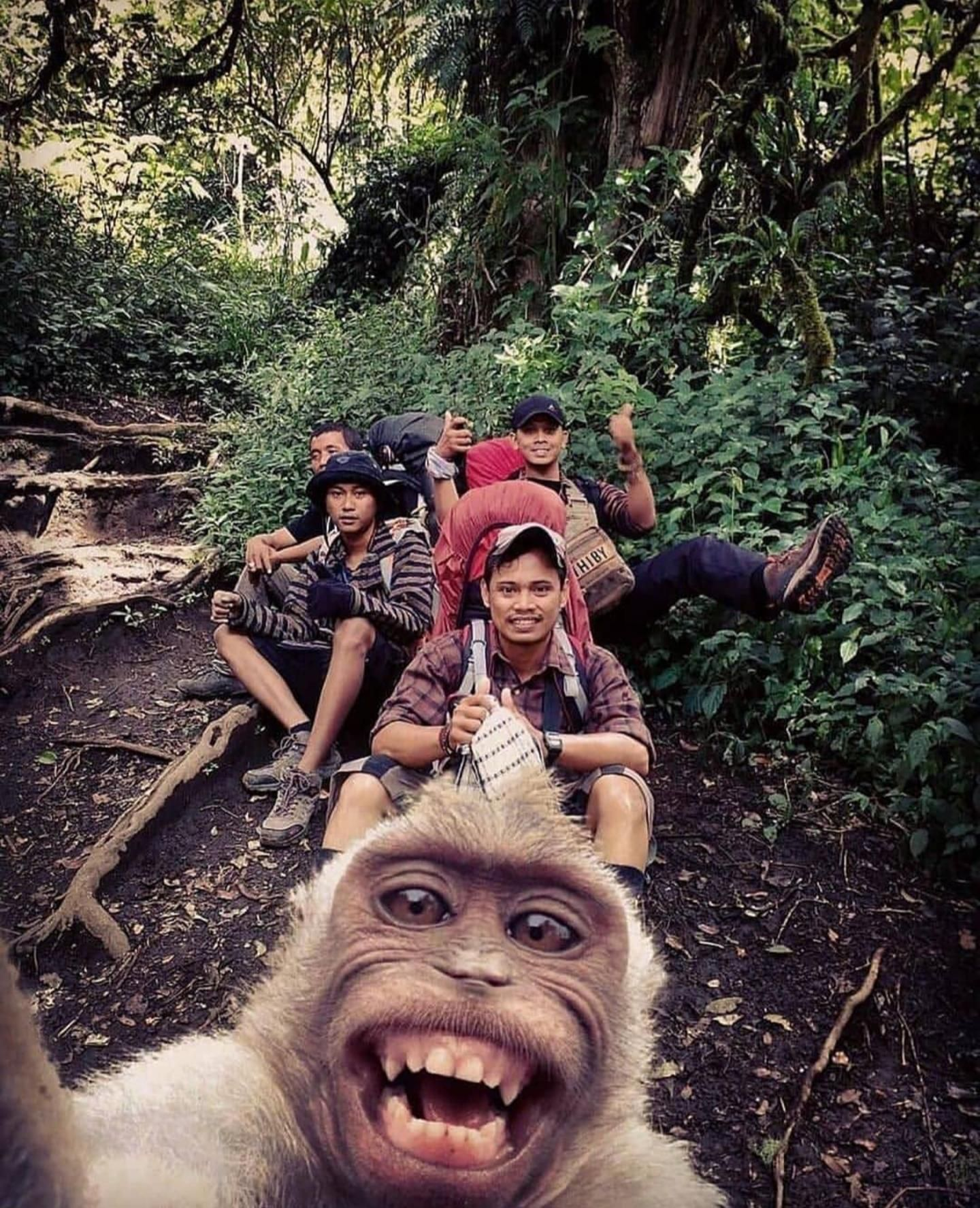 They are evolving. Monkey selfie