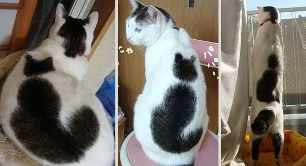 Cat with cat on his back