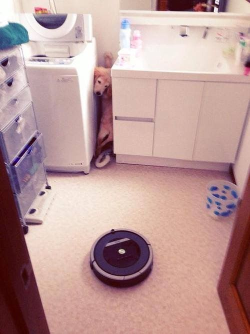 Roomba, the NOPE of the dog world..