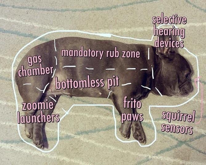 Anatomy of a French Bulldog