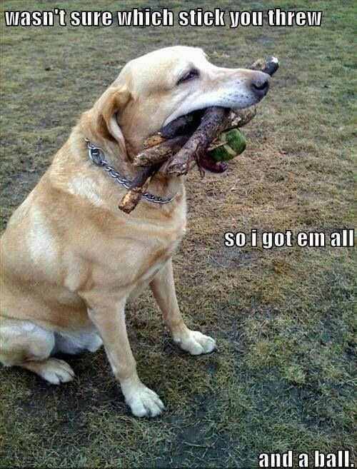 Every time i take my dog to the park