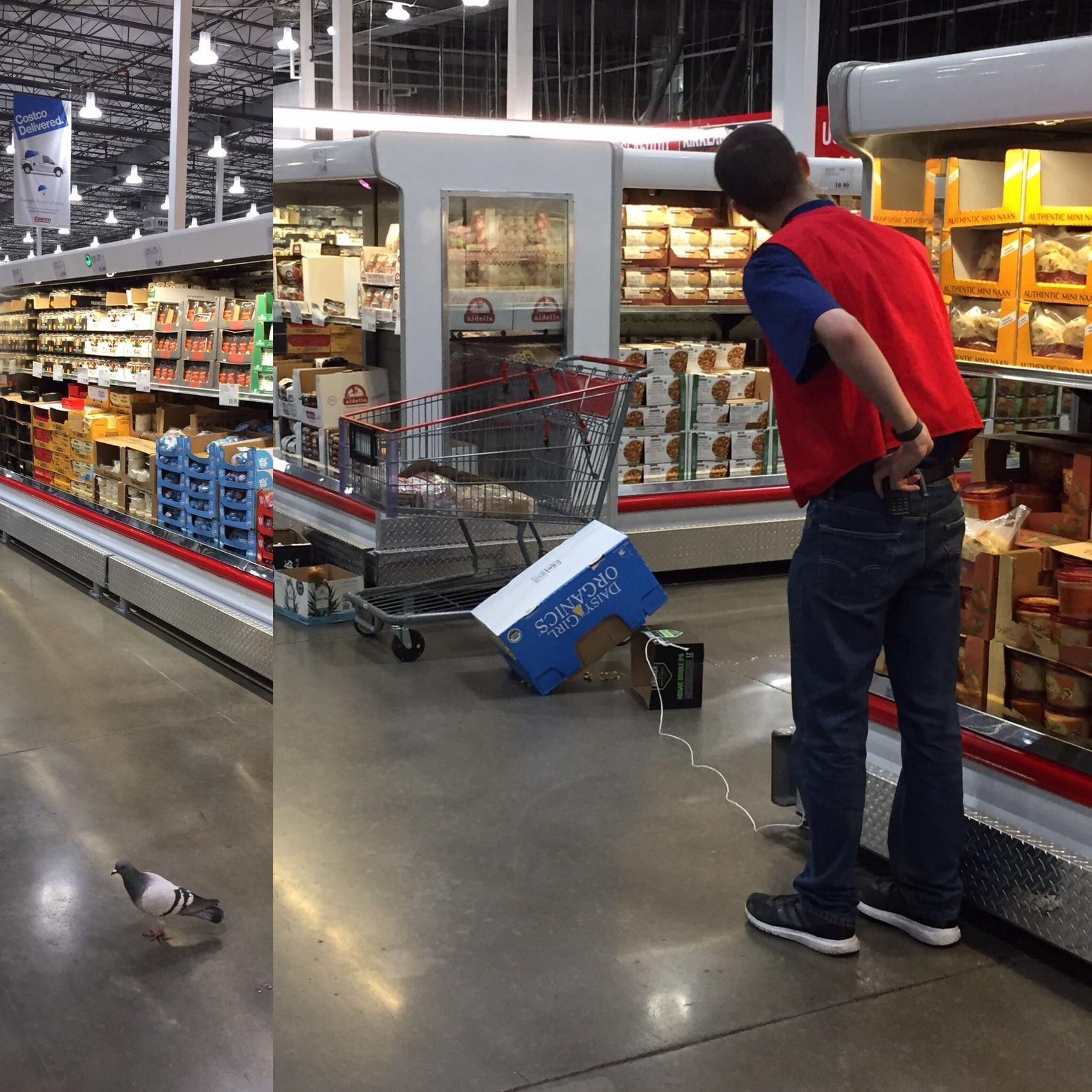 A store employee hunting a pigeon