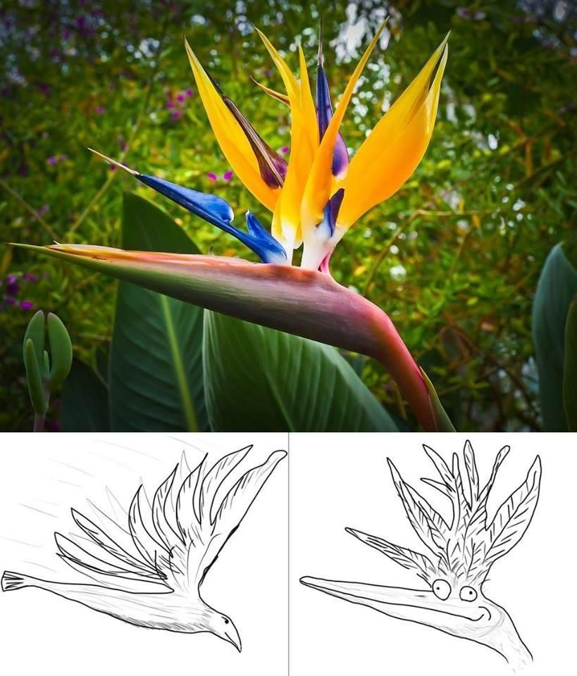 Today I learned: This plant is called the Bird of Paradise because it looks like the picture on the left, not the one on the right.
