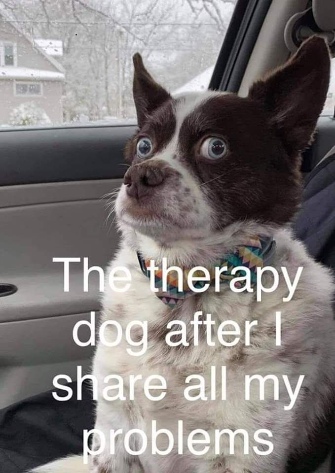 Therapy dog is a good listener