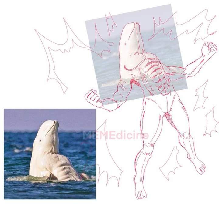 Beluga flexing