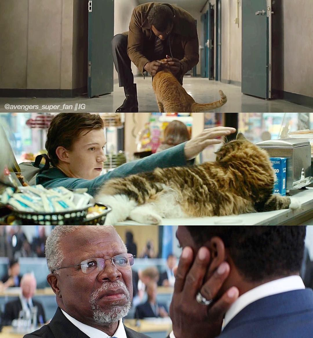 Cat pets in Marvel movies