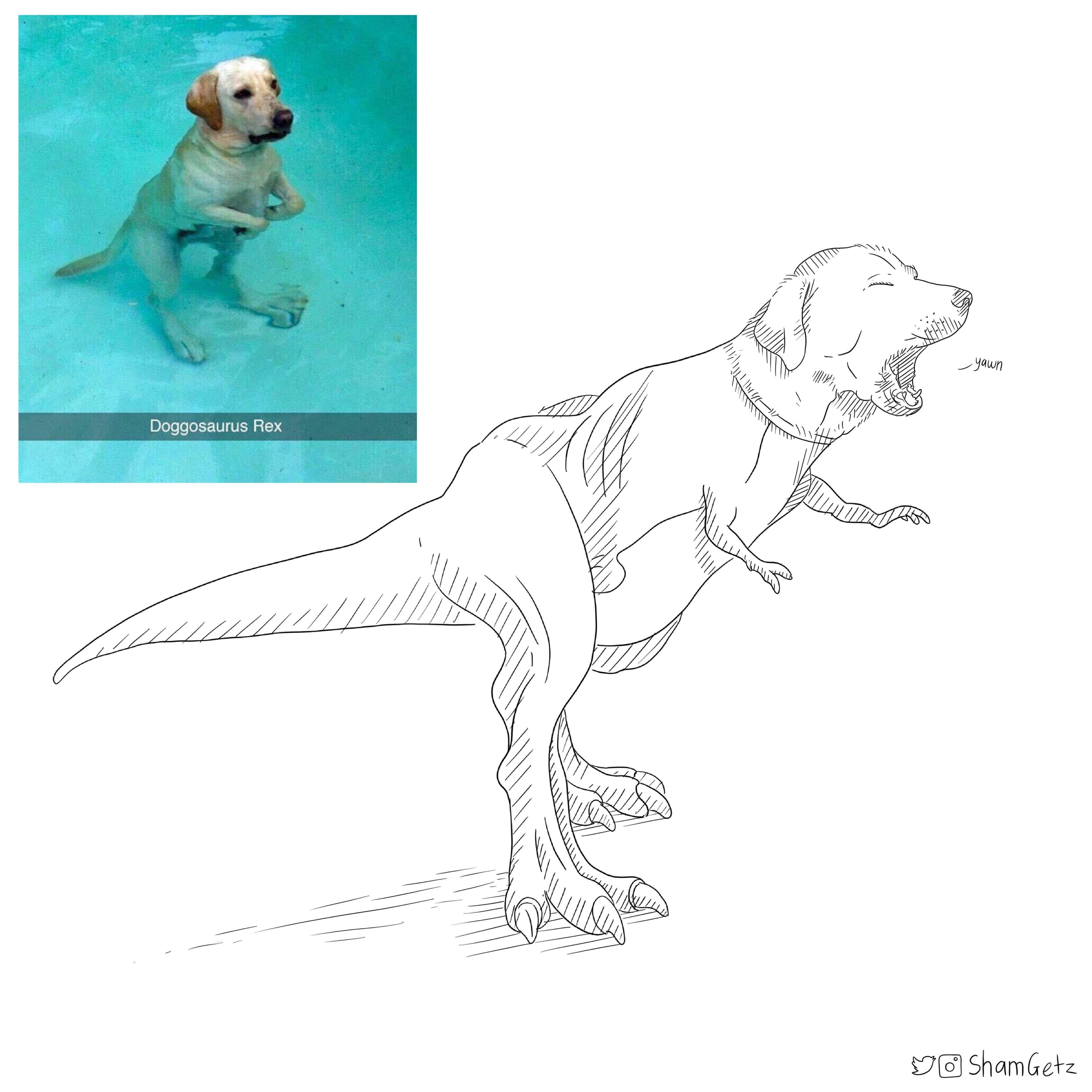 Labradorus rex.