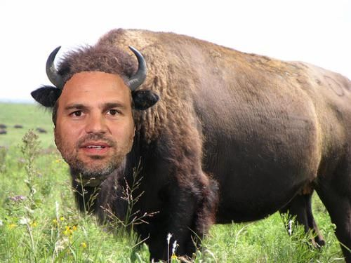 Mark Buffalo. Thank you for your time