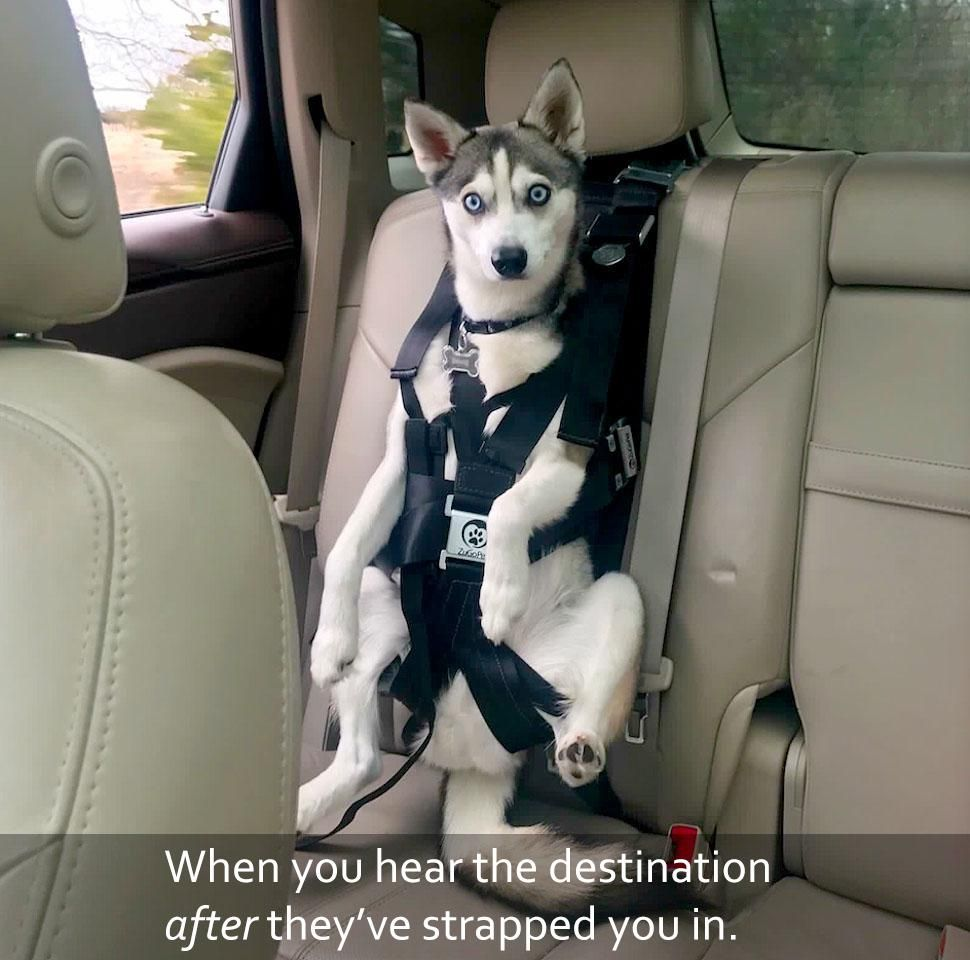 Yep, you can bet, we're going to the vet!