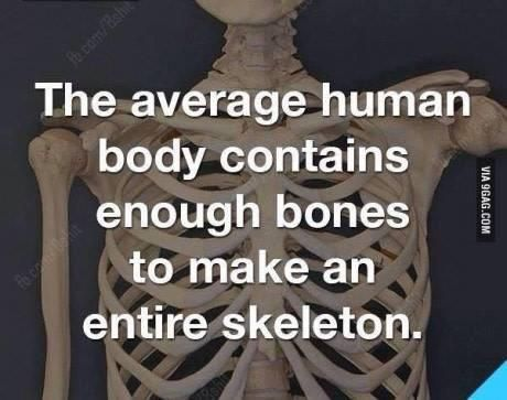 No bones about it