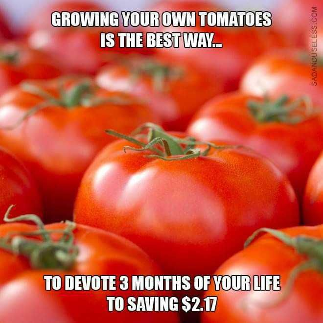 Let's grow some tomatoes