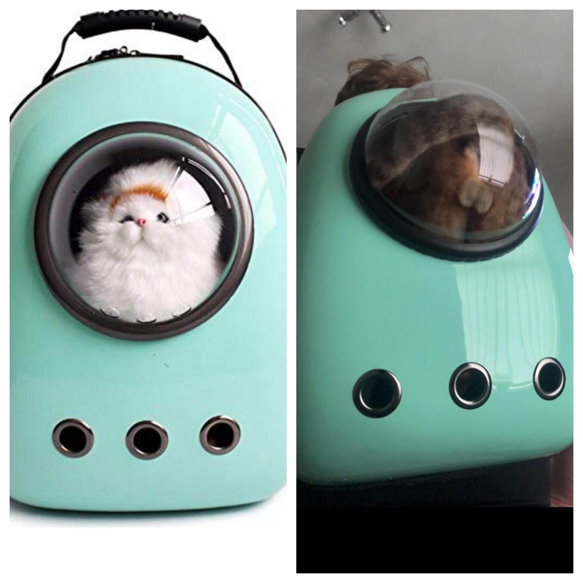Expectation vs reality - cat edition.