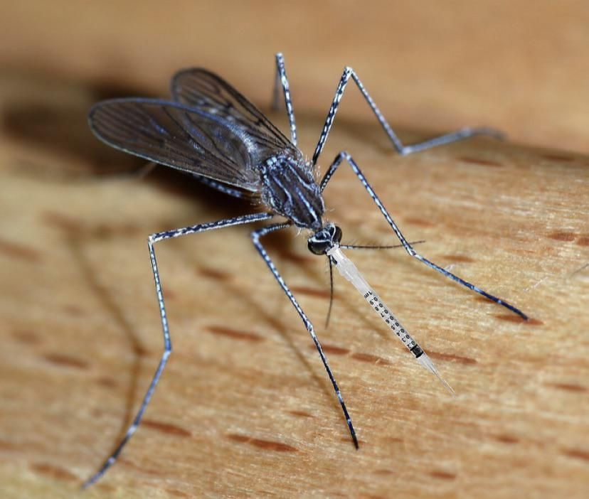 We should create genetically modified mosquitos that provide vaccines whenever they bite