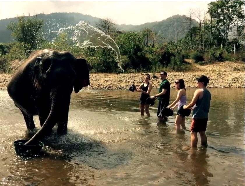 Elephant's Soul Flies Out Of His Body To Escape Annoying Tourists.