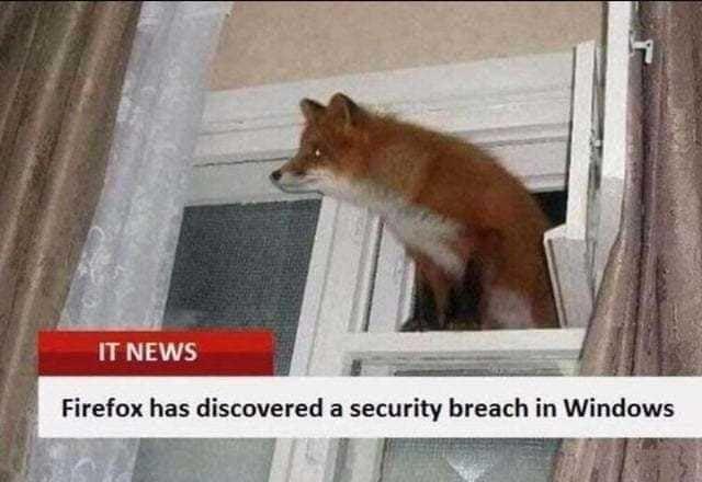 Cheeky foxy
