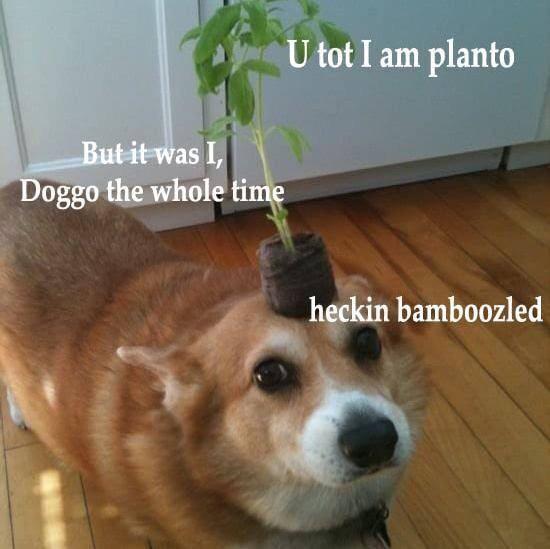 Hecking bamboozle