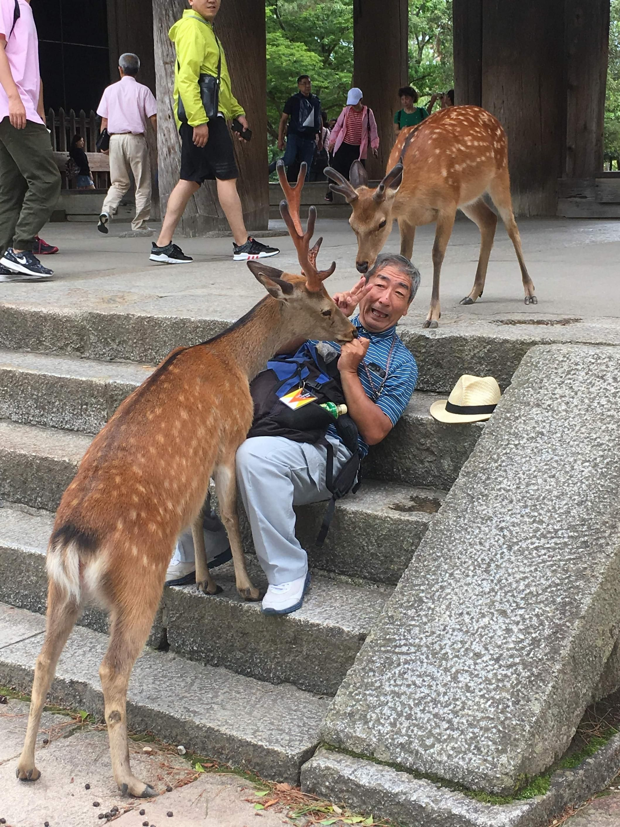 Captured a pic today of this man trying in vain to yield to a deer in Nara, Japan.