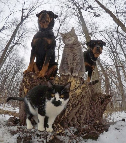 Cats'n'Dogs - Dropping the hottest RnB album this year.