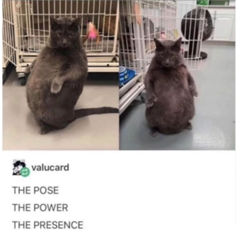 One does not simply defeat a chonk