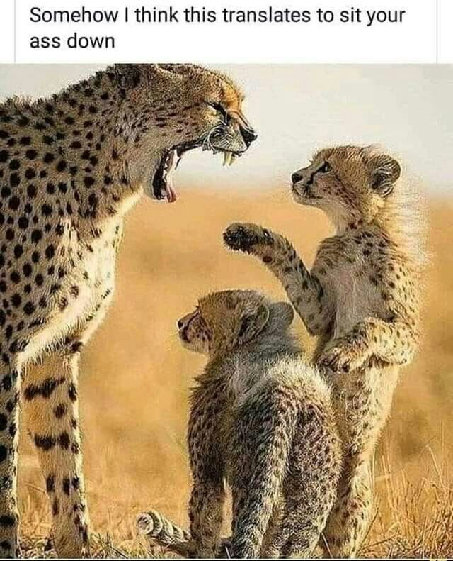 Parents being parents