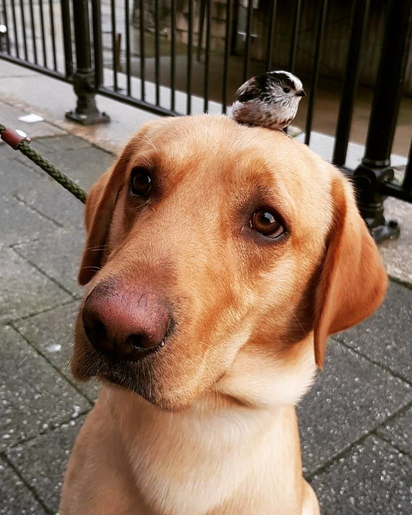 Went for a walk today and my dog found a baby bird.