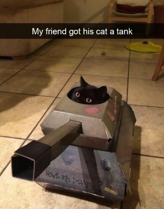 Be aware of the kitten tank