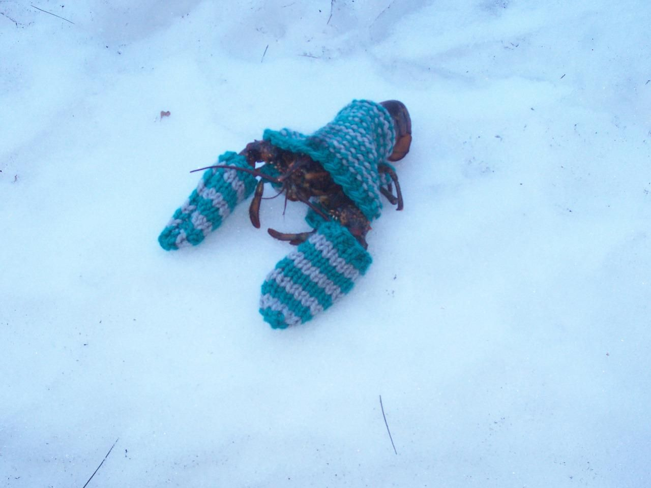 Remember, you need to keep your pets warm, when they go outside.
