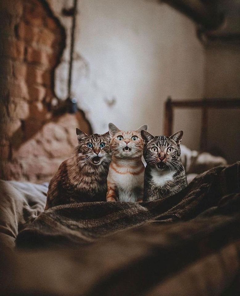 What cats look like !! What surprised them ..