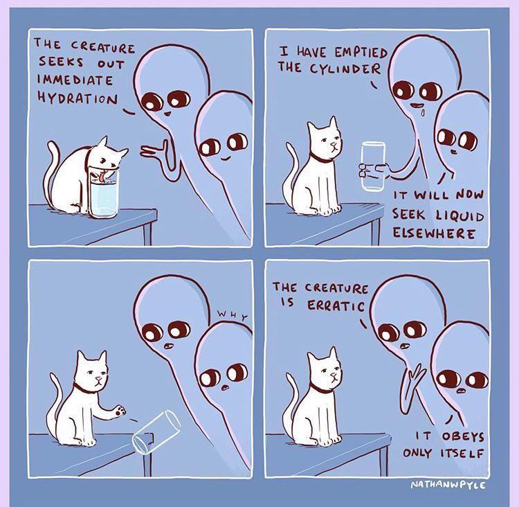 The creature is erratic.