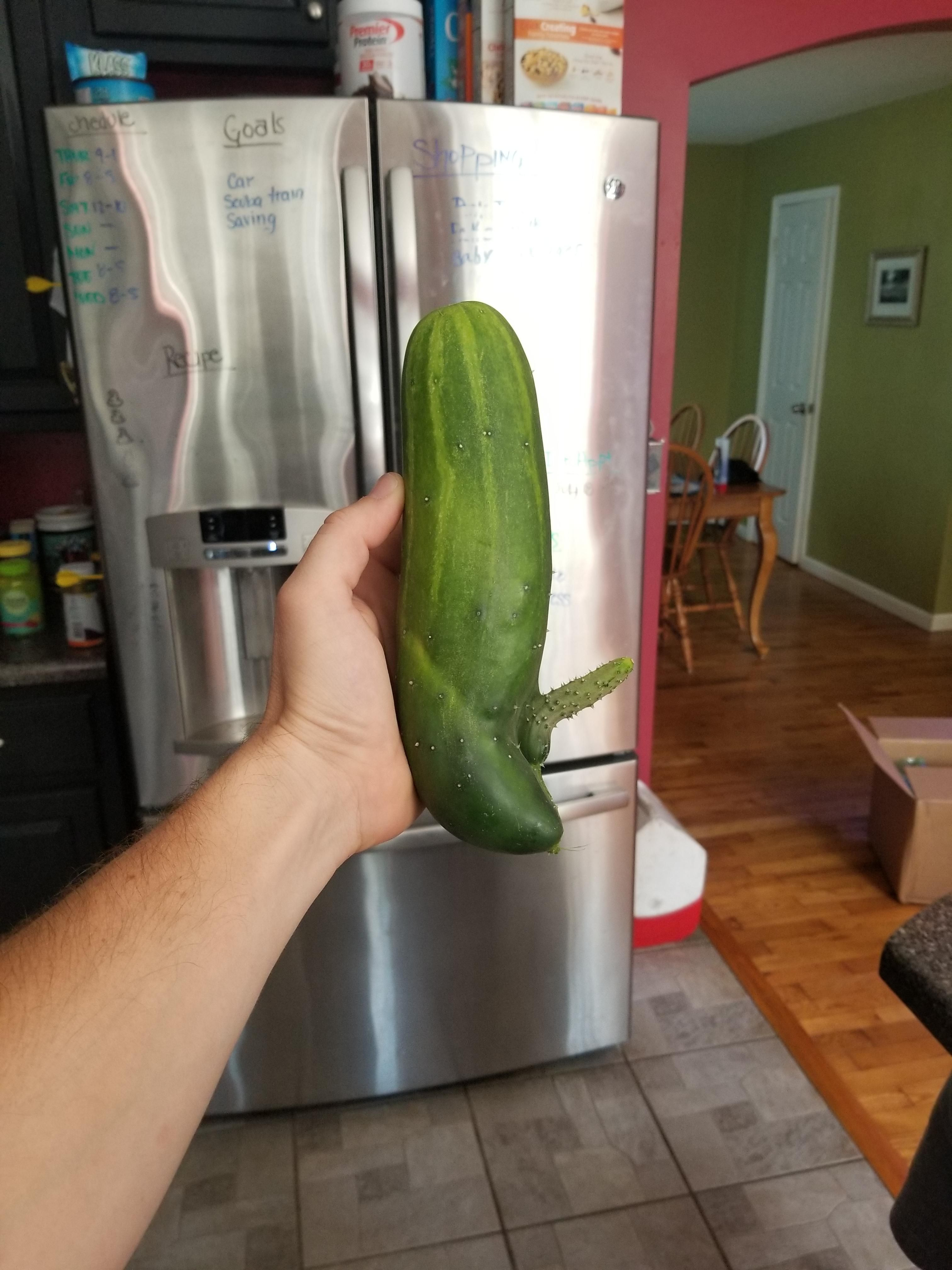 I grew a cucumber