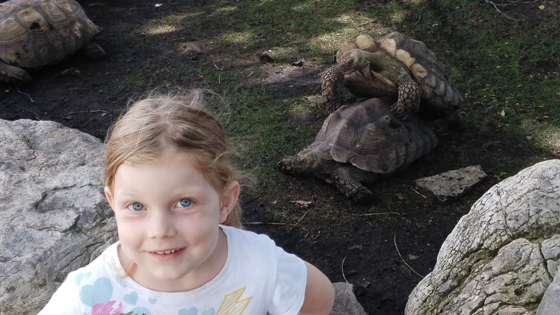 "Took my daughter to the zoo and she wanted a picture with the ""dancing turtles""."