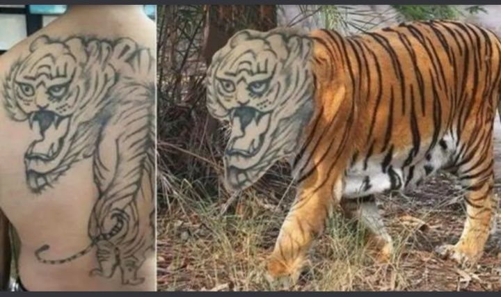 Now that's a scary tiger