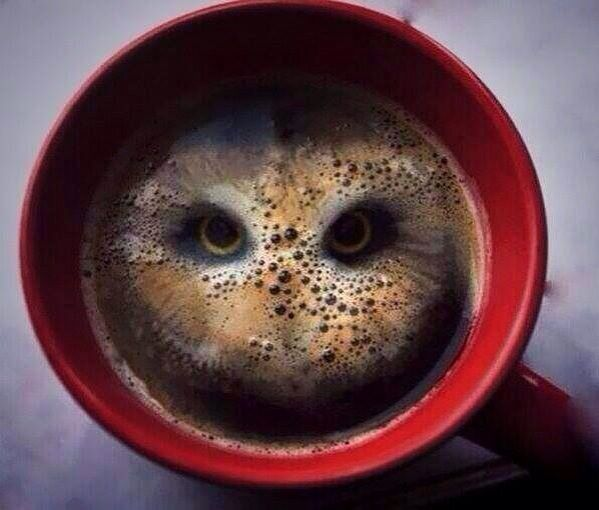 After having two hula hoop crisps dropped in it, this coffee looks like an owl