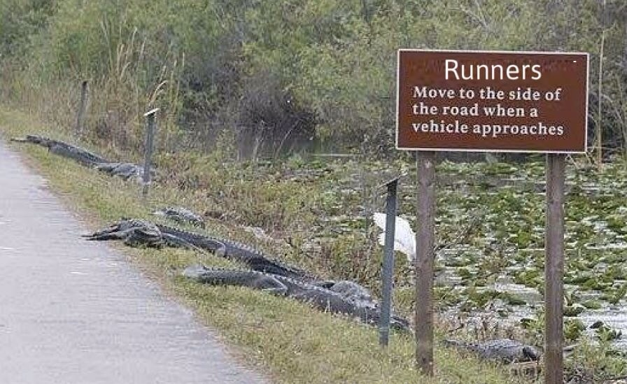 Those sneaky alligators