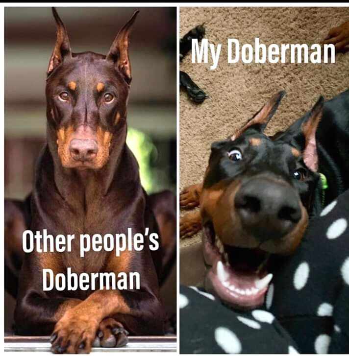 Other peoples Dogs vs My dog