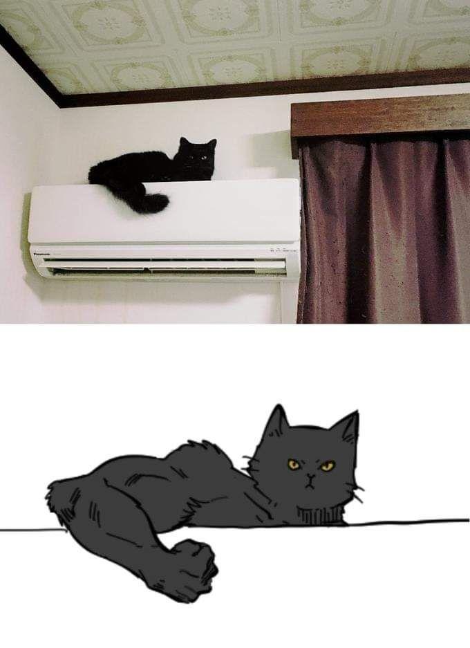 Muscular kitty
