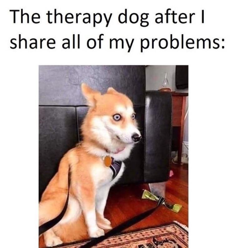 Do therapy dogs go to therapy?