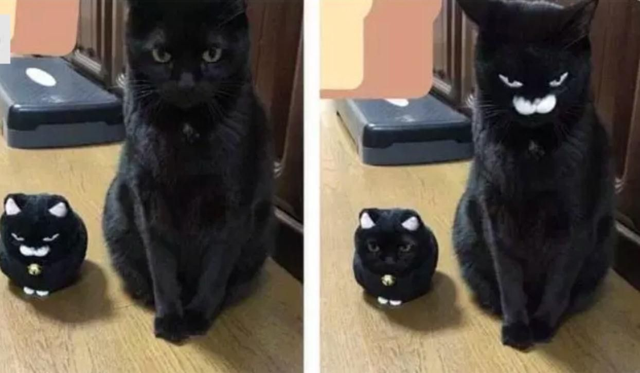 Another great cat & plush face swap :3