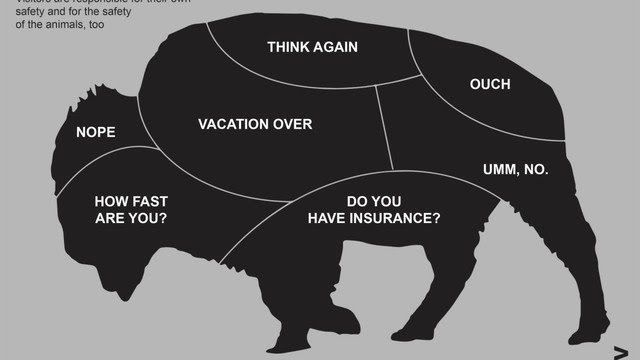 National park service bison petting guide